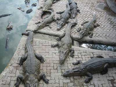 Samut-Prakan-Crocodile-Farm-and-Zoo
