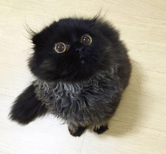 big-eyed-cat-3