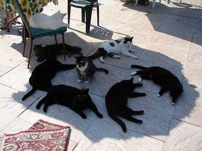 猫の不思議