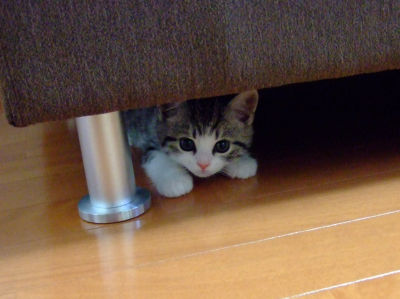 ネコの不思議