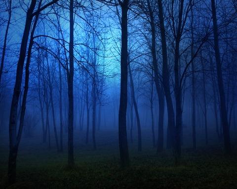 忘れ物の森