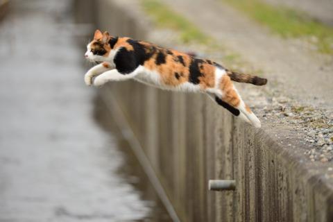 猫の不思議2