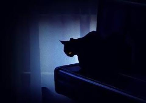 青黄眼の猫