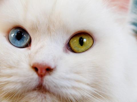 白猫の守護