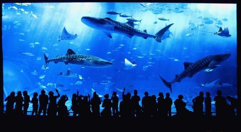 じいちゃんの水族館