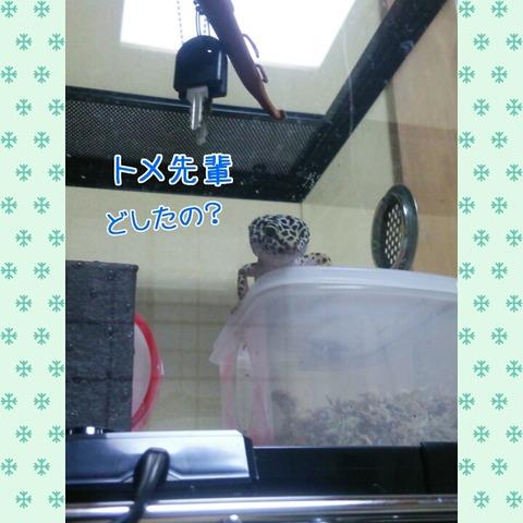 PhotoGrid_1443517619671