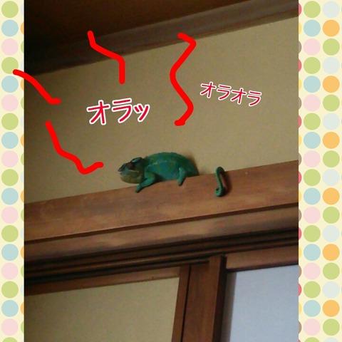 PhotoGrid_1443517231876