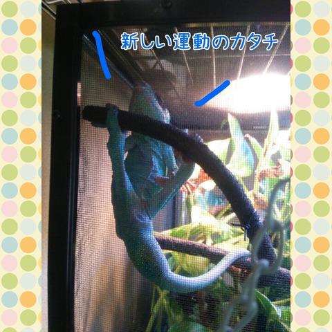 PhotoGrid_1443517287373