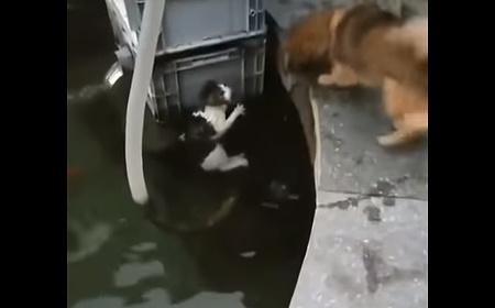 犬が水から猫を救う01