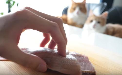 catfood_1