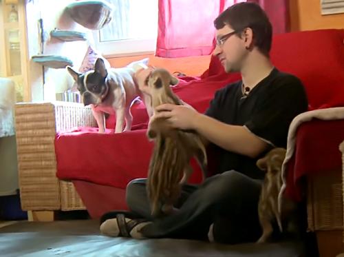 人間と子犬によって育てられている赤ちゃんイノシシたち