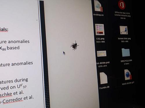 家に現れた蜘蛛と遊んでみた
