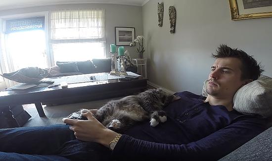 テレビゲームをしたいのに遊ばせてくれない猫6