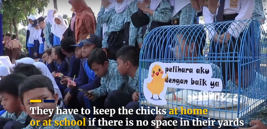 chick-1200x580