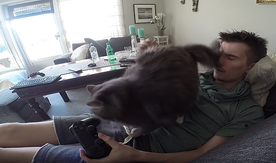 テレビゲームをしたいのに遊ばせてくれない猫3
