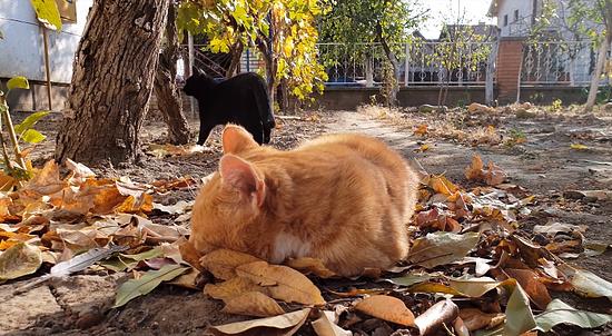 お昼寝を若いメス猫に邪魔されてしまったオス猫5