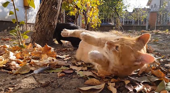 お昼寝を若いメス猫に邪魔されてしまったオス猫3