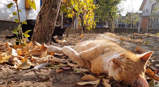 お昼寝を若いメス猫に邪魔されてしまったオス猫1