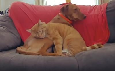犬と猫がカップルにしか見えない6