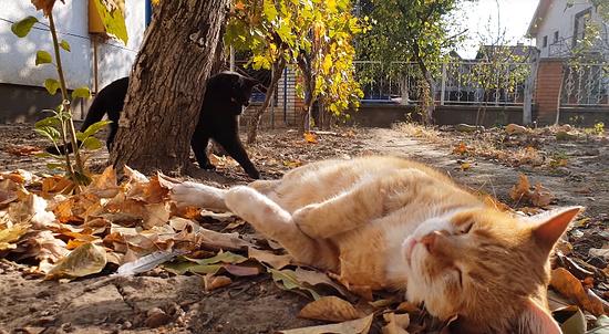 お昼寝を若いメス猫に邪魔されてしまったオス猫