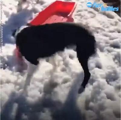 sled9