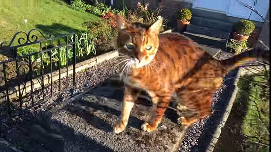 飼主さんの帰りを門で待っていてくれる忠猫トント4