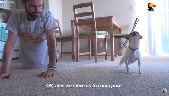 yoga-dog3