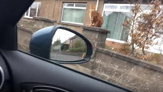 飼主さんの帰りを門で待っていてくれる忠猫トント6