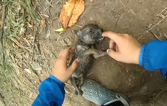 男性が溺れている子犬を発見
