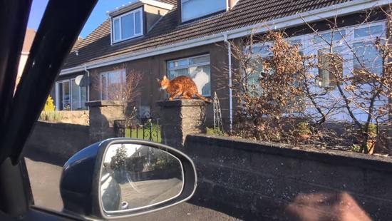 飼主さんの帰りを門で待っていてくれる忠猫トント2