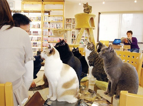 cafe-of-cats