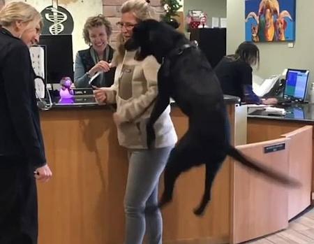 動物病院が大好き過ぎてジャンプが止まらない犬5