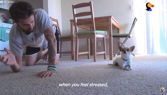 yoga-dog1