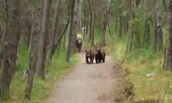 熊の親子と遭遇してしまった男性4