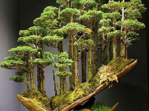 【海外の反応】1万6000ドル(約1792000円)で落札された日本の盆栽