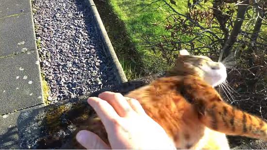 飼主さんの帰りを門で待っていてくれる忠猫トント5