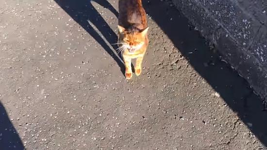 飼主さんの帰りを門で待っていてくれる忠猫トント3