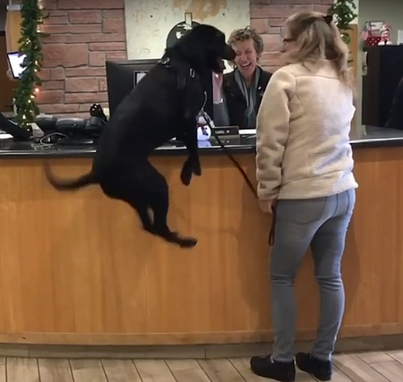 動物病院が大好き過ぎてジャンプが止まらない犬