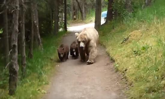 熊の親子と遭遇してしまった男性1