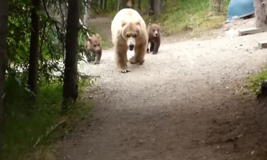 熊の親子と遭遇してしまった男性2