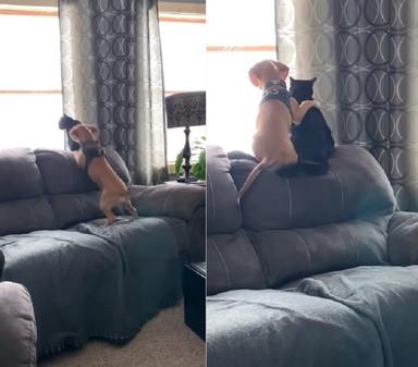 beagle_cat580_2