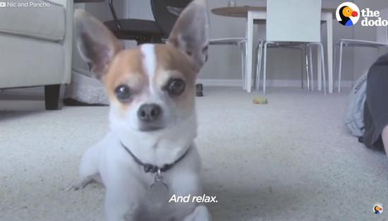 yoga-dog6