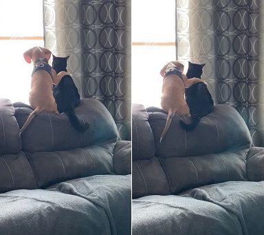 beagle_cat580_3