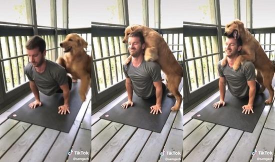 yogi_dog2