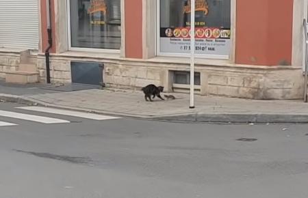 ネズミを追いかけ回そうと思ったら逆に追い回された猫00