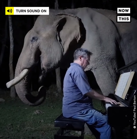 musician6