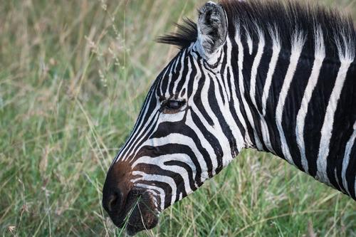 なぜこんなにも多くの生き物が絶滅したのだろう?