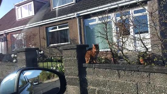 飼主さんの帰りを門で待っていてくれる忠猫トント7