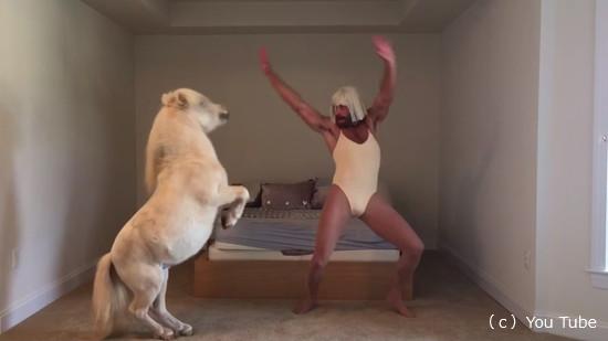 キャラの濃い飼い主さんと一緒に踊るミニチュアホース6