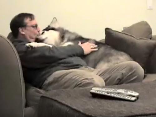 抱っこして!お父さんが好きで好きで仕方が無いもふもふな大型犬